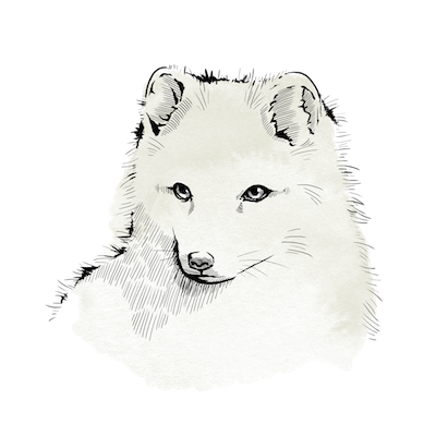 computer graphic image of an arctic fox